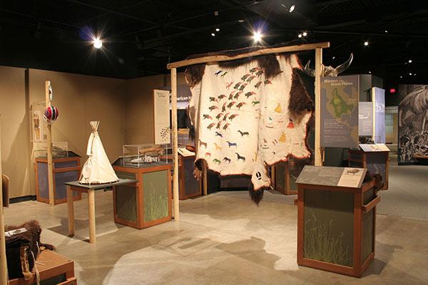 Bison Exhibit Installation